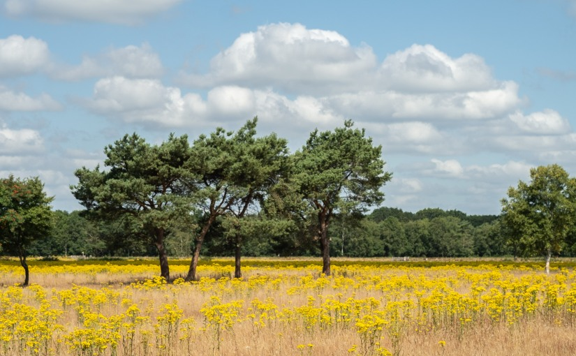 Mooi Drenthe
